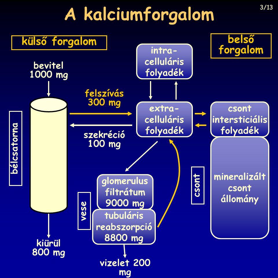 A kalciumforgalom belső külső forgalom forgalom intra- celluláris