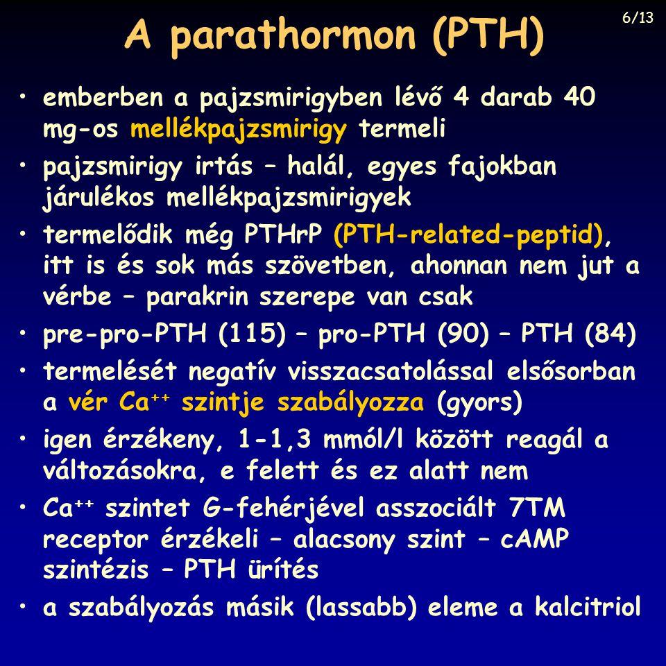 A parathormon (PTH) 6/13. emberben a pajzsmirigyben lévő 4 darab 40 mg-os mellékpajzsmirigy termeli.