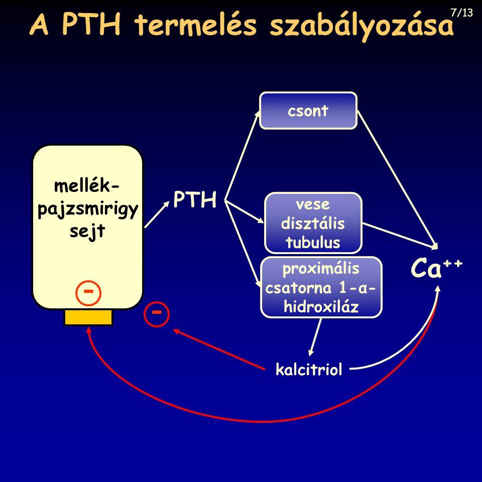 A PTH termelés szabályozása