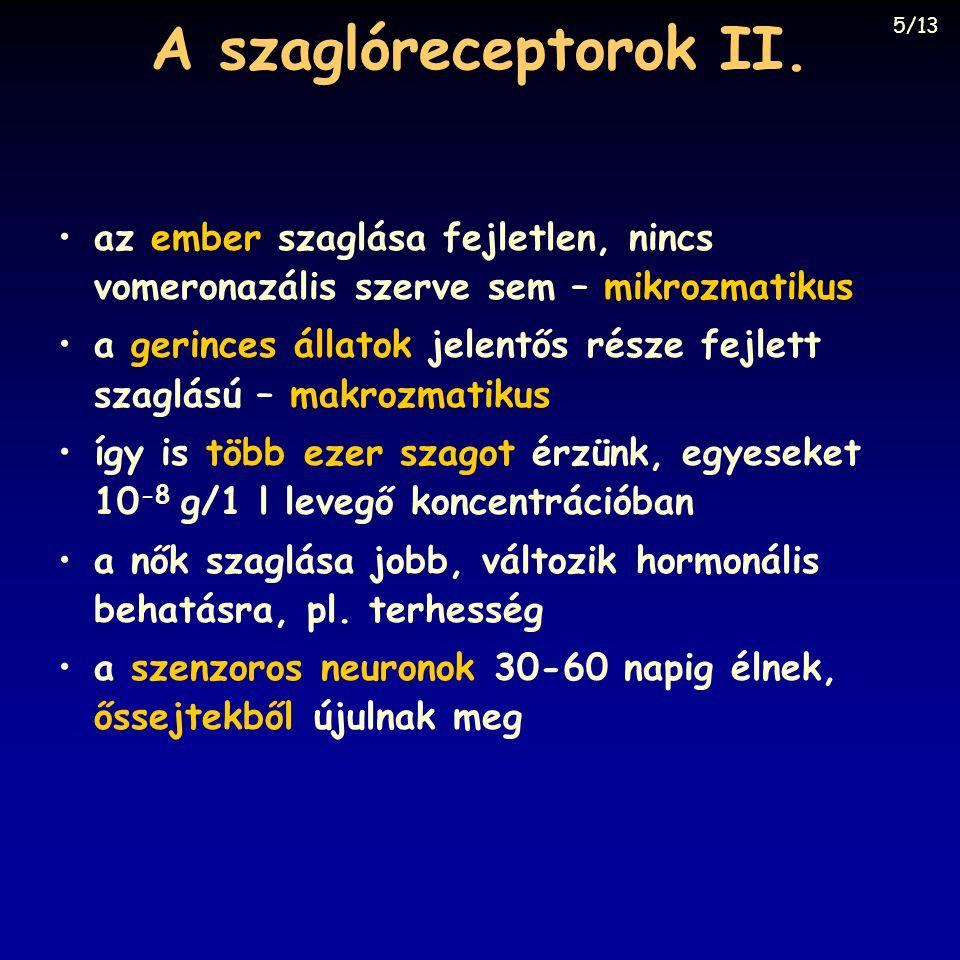 A szaglóreceptorok II. 5/13. az ember szaglása fejletlen, nincs vomeronazális szerve sem – mikrozmatikus.
