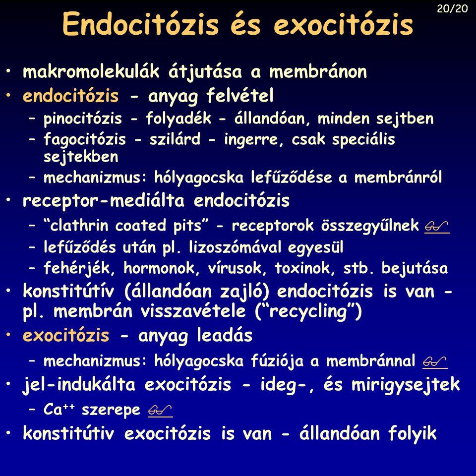 Endocitózis és exocitózis