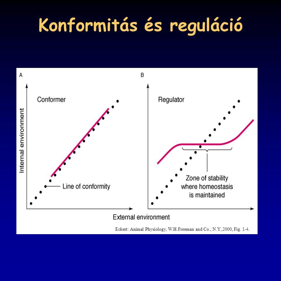 Konformitás és reguláció