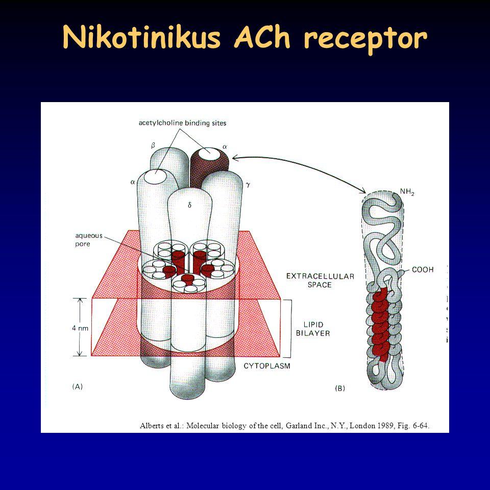 Nikotinikus ACh receptor