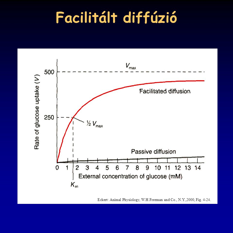 Facilitált diffúzió Eckert: Animal Physiology, W.H.Freeman and Co., N.Y.,2000, Fig. 4-24.