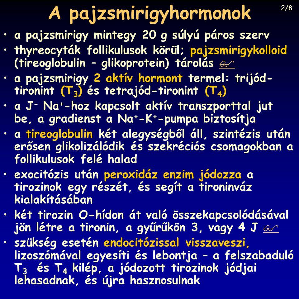 A pajzsmirigyhormonok
