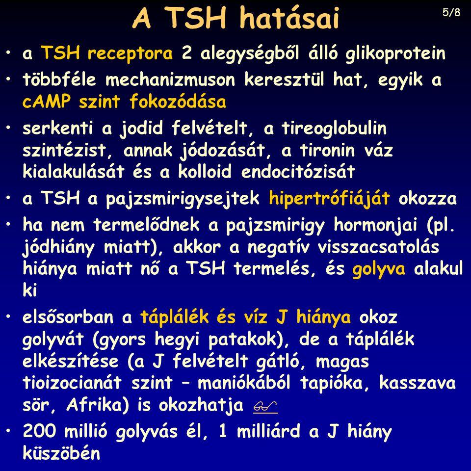 A TSH hatásai a TSH receptora 2 alegységből álló glikoprotein