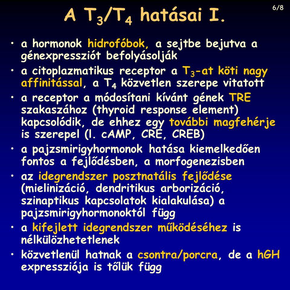 A T3/T4 hatásai I. 6/8. a hormonok hidrofóbok, a sejtbe bejutva a génexpressziót befolyásolják.