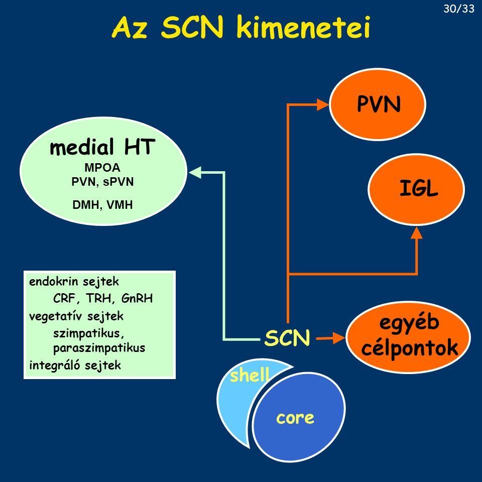 Az SCN kimenetei PVN medial HT IGL egyéb célpontok SCN shell core MPOA