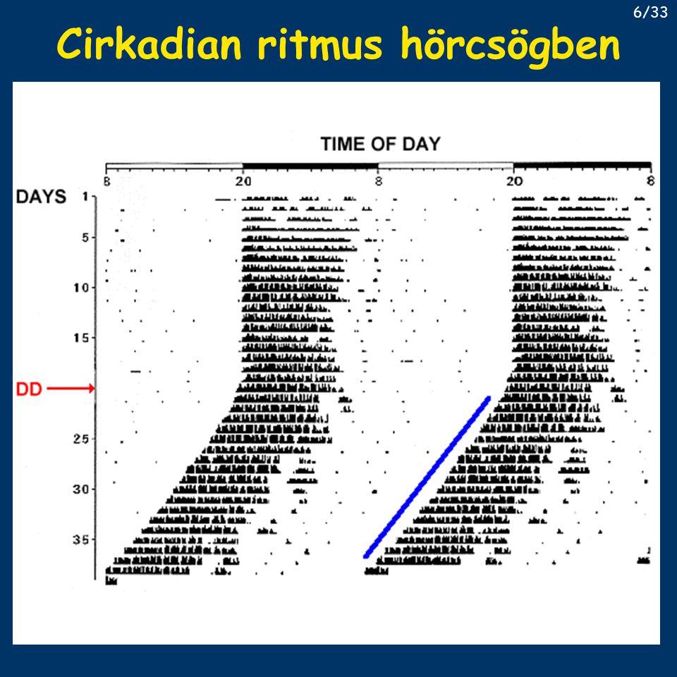 Cirkadian ritmus hörcsögben