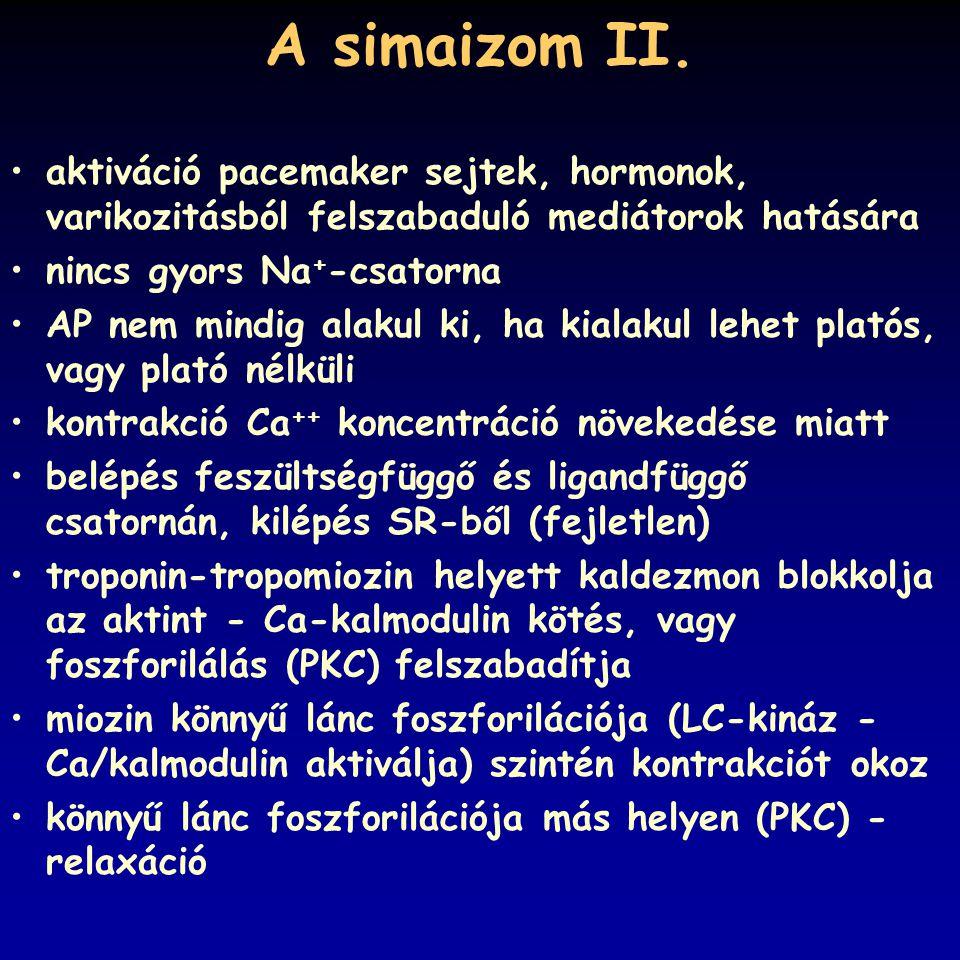 A simaizom II. aktiváció pacemaker sejtek, hormonok, varikozitásból felszabaduló mediátorok hatására.