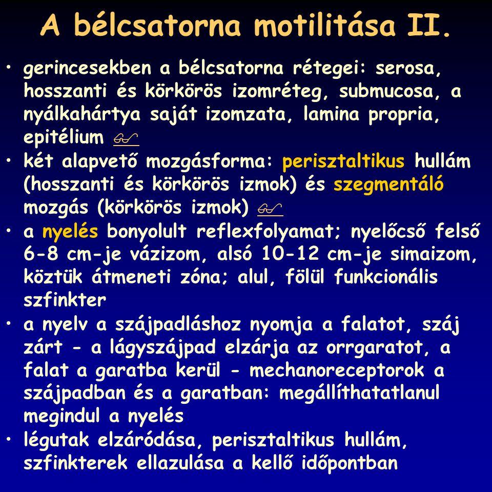 A bélcsatorna motilitása II.