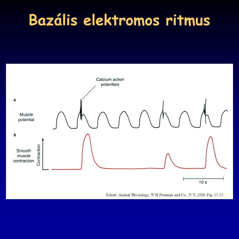 Bazális elektromos ritmus