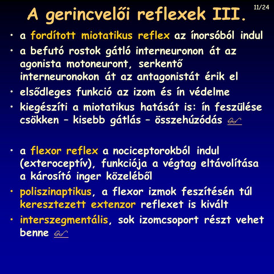 A gerincvelői reflexek III.