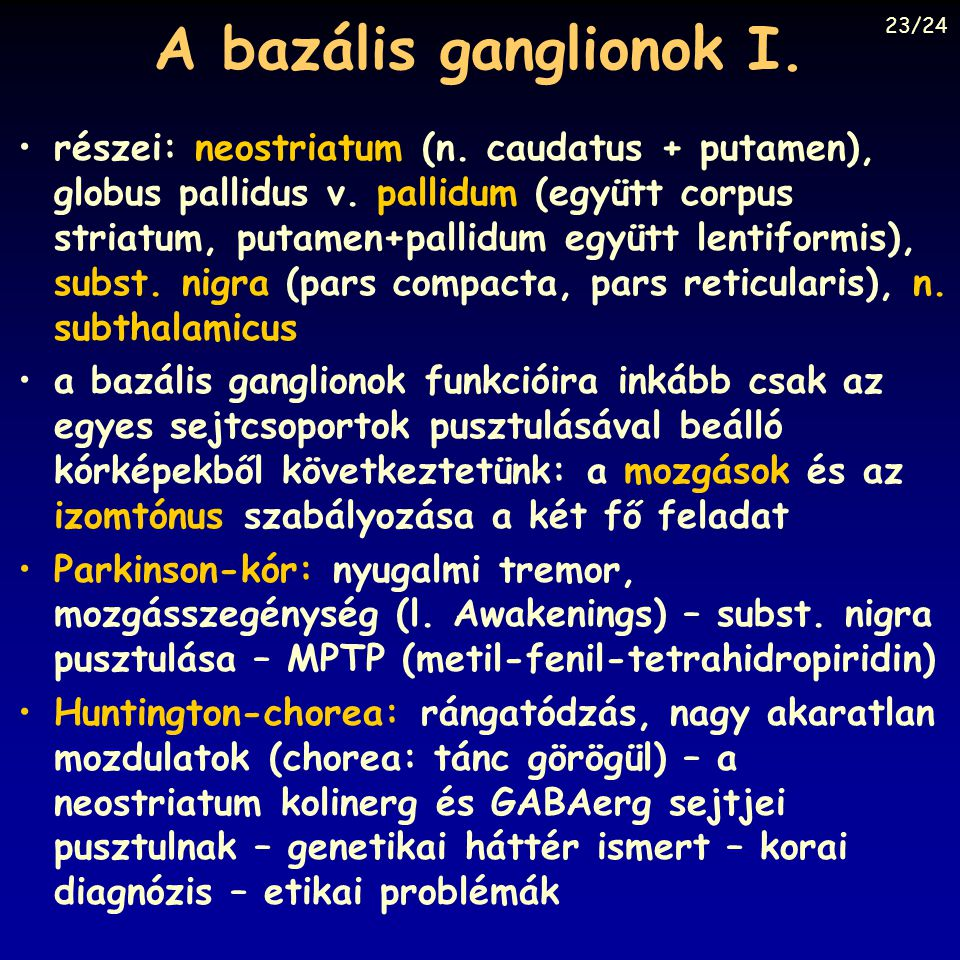 A bazális ganglionok I. 23/24.
