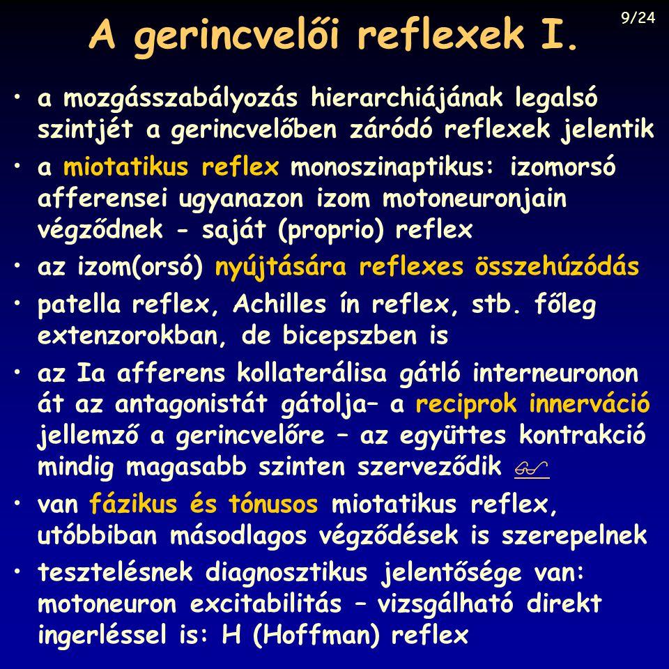 A gerincvelői reflexek I.