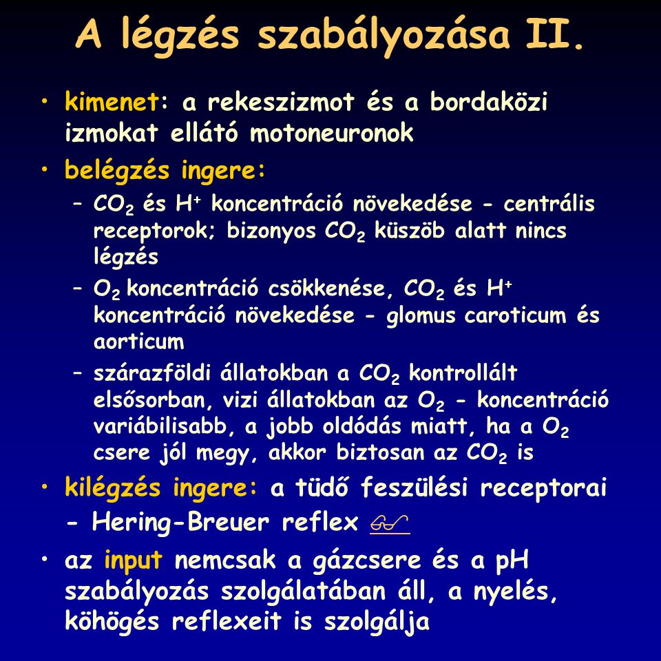 A légzés szabályozása II.