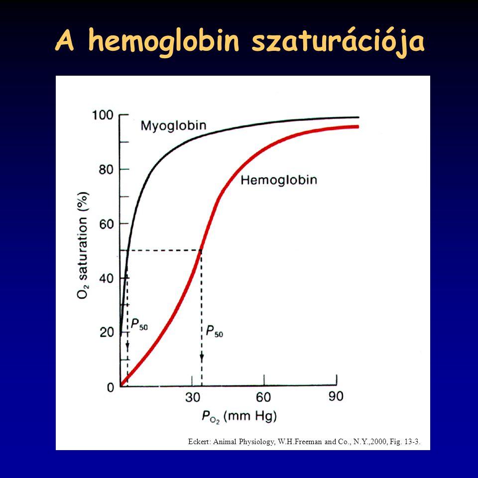 A hemoglobin szaturációja