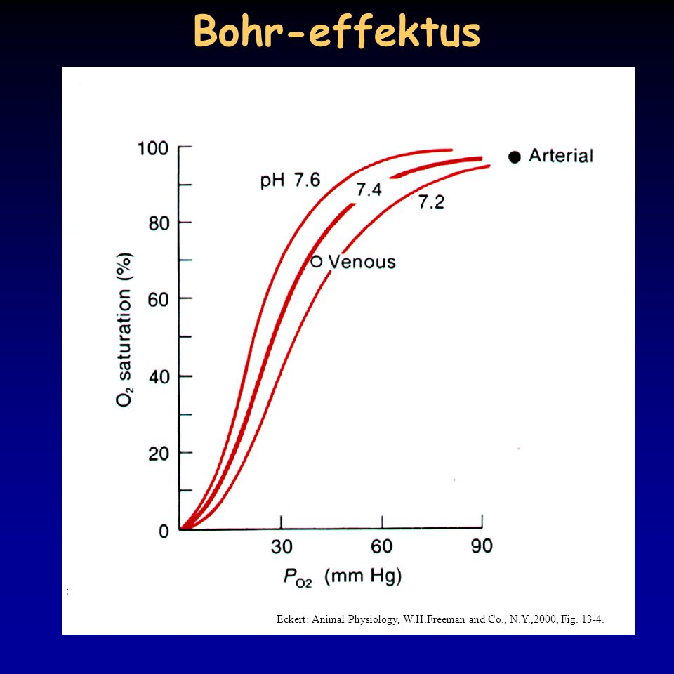 Bohr-effektus Eckert: Animal Physiology, W.H.Freeman and Co., N.Y.,2000, Fig