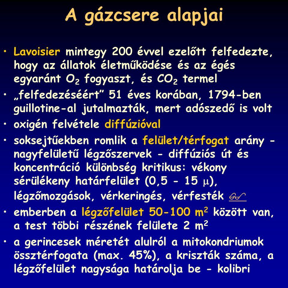A gázcsere alapjai Lavoisier mintegy 200 évvel ezelőtt felfedezte, hogy az állatok életműködése és az égés egyaránt O2 fogyaszt, és CO2 termel.