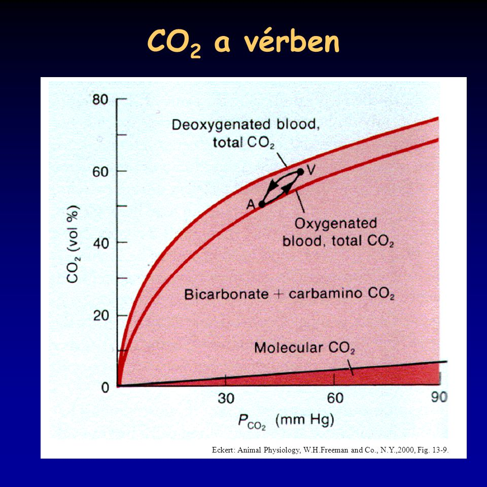 CO2 a vérben Eckert: Animal Physiology, W.H.Freeman and Co., N.Y.,2000, Fig. 13-9.