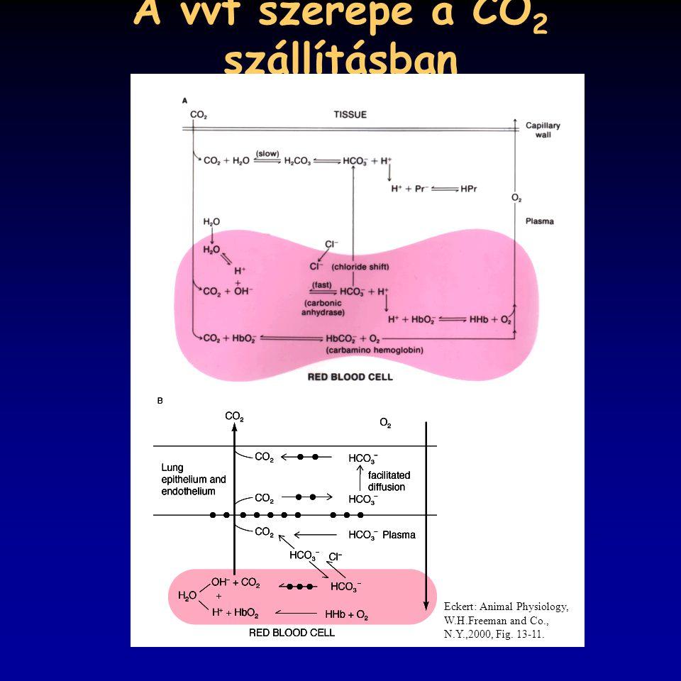 A vvt szerepe a CO2 szállításban