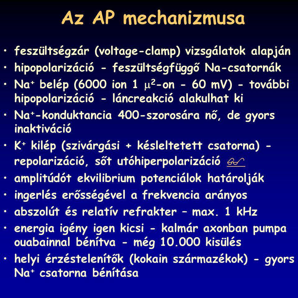 Az AP mechanizmusa feszültségzár (voltage-clamp) vizsgálatok alapján