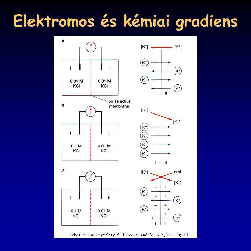 Elektromos és kémiai gradiens