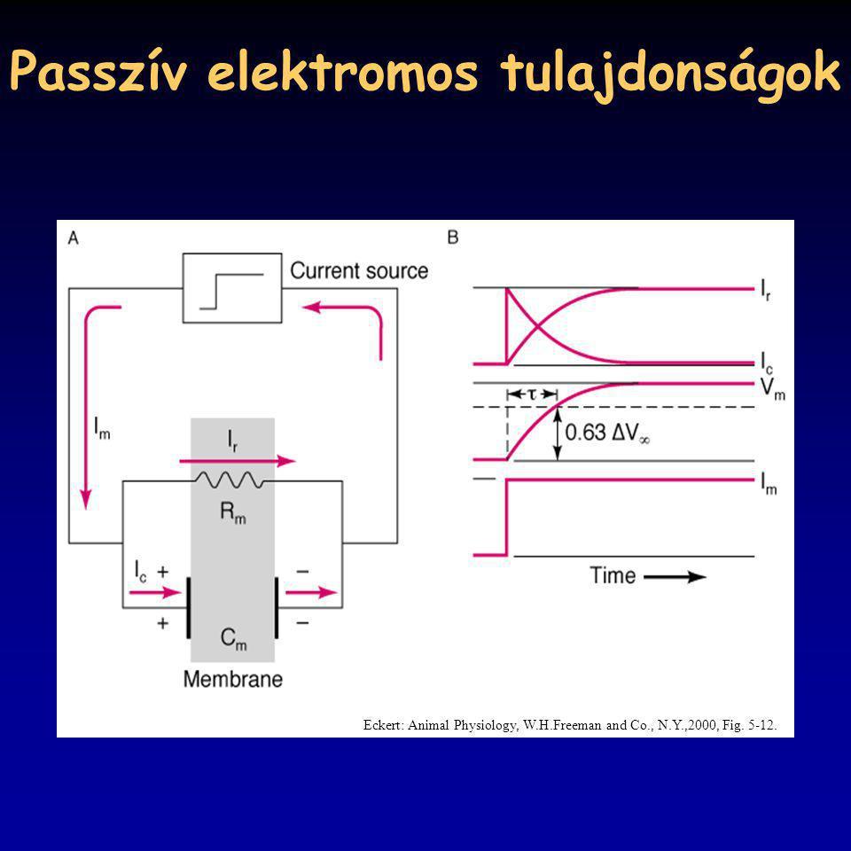 Passzív elektromos tulajdonságok