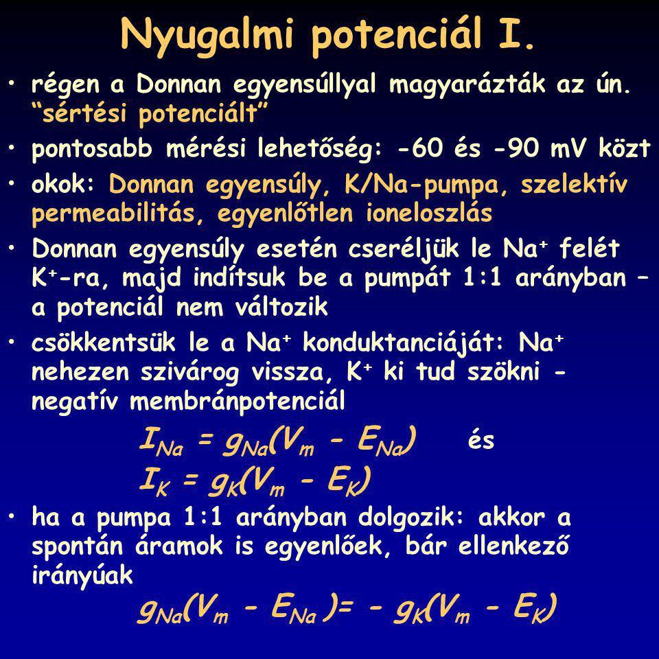 Nyugalmi potenciál I. régen a Donnan egyensúllyal magyarázták az ún. sértési potenciált pontosabb mérési lehetőség: -60 és -90 mV közt.