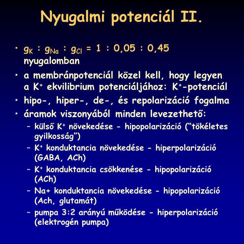 Nyugalmi potenciál II. gK : gNa : gCl = 1 : 0,05 : 0,45 nyugalomban