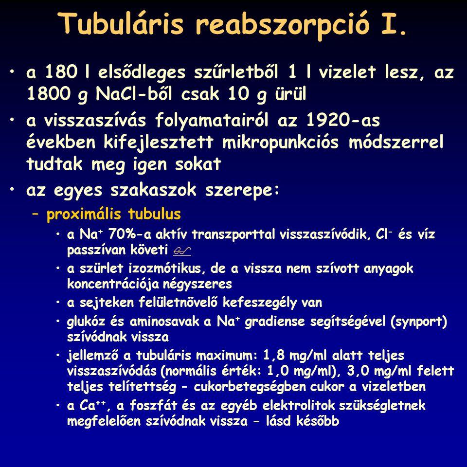 Tubuláris reabszorpció I.