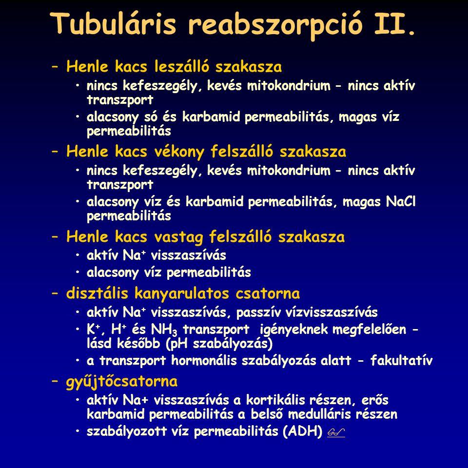 Tubuláris reabszorpció II.