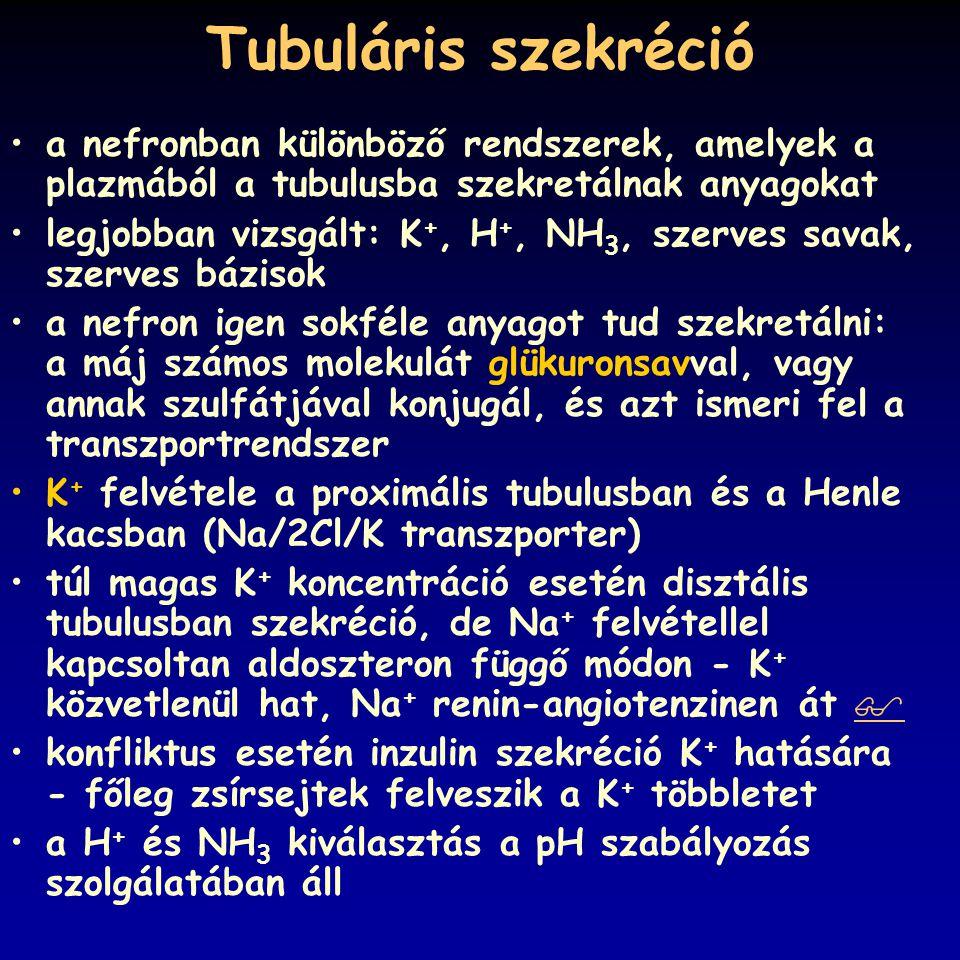 Tubuláris szekréció a nefronban különböző rendszerek, amelyek a plazmából a tubulusba szekretálnak anyagokat.