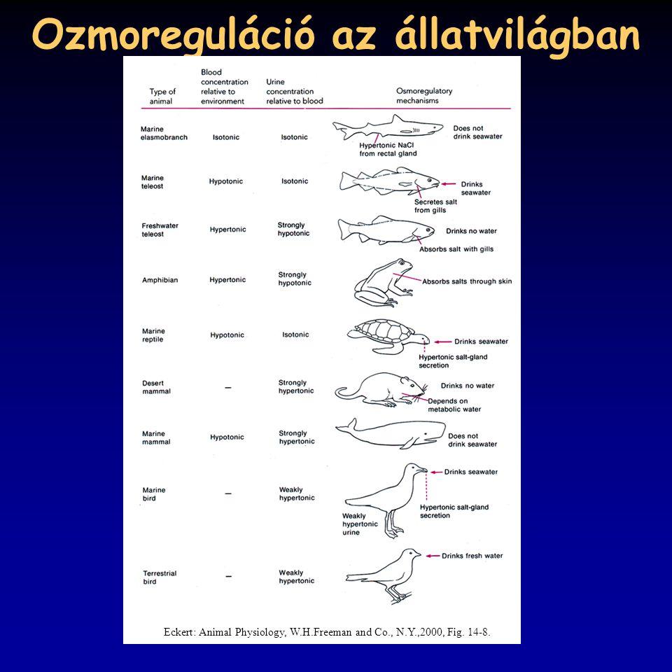 Ozmoreguláció az állatvilágban