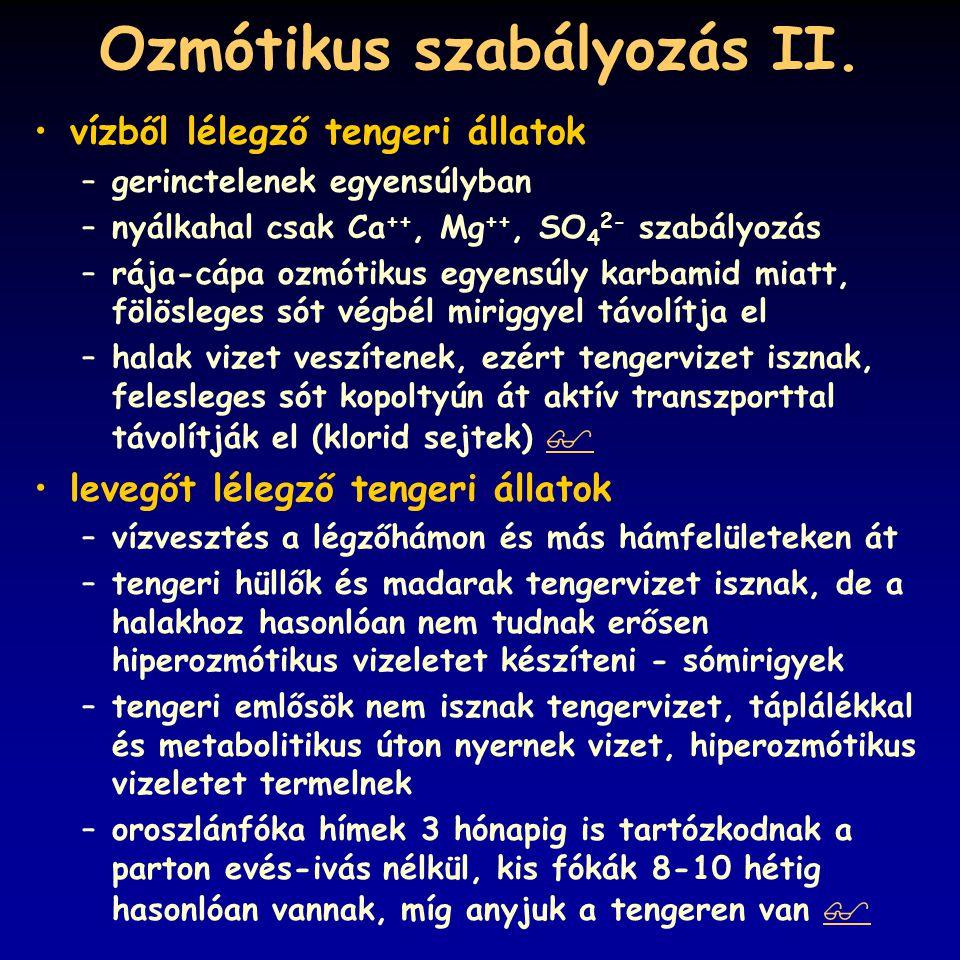 Ozmótikus szabályozás II.