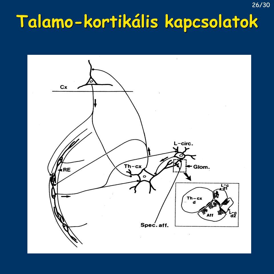 Talamo-kortikális kapcsolatok
