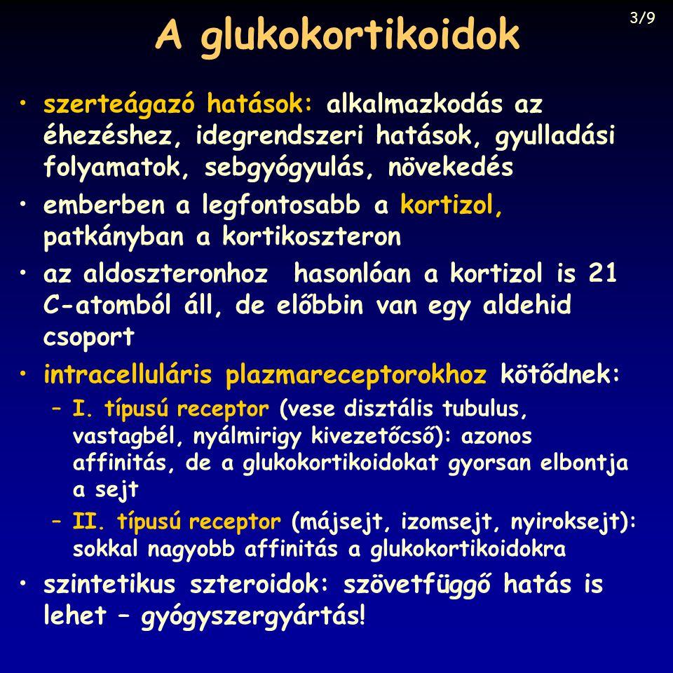 A glukokortikoidok 3/9. szerteágazó hatások: alkalmazkodás az éhezéshez, idegrendszeri hatások, gyulladási folyamatok, sebgyógyulás, növekedés.