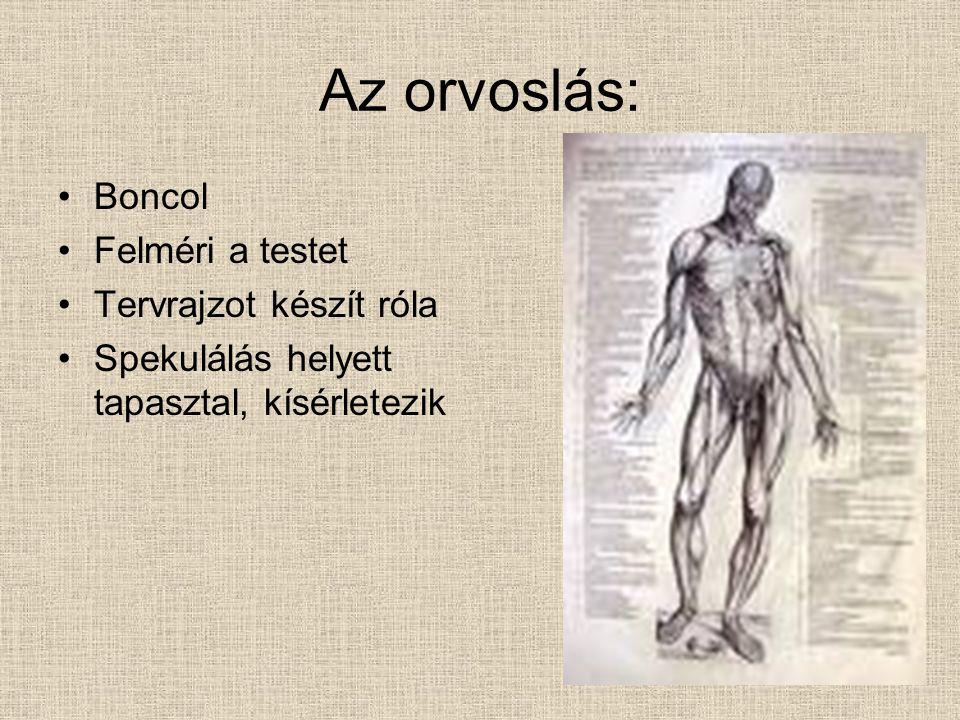 Az orvoslás: Boncol Felméri a testet Tervrajzot készít róla