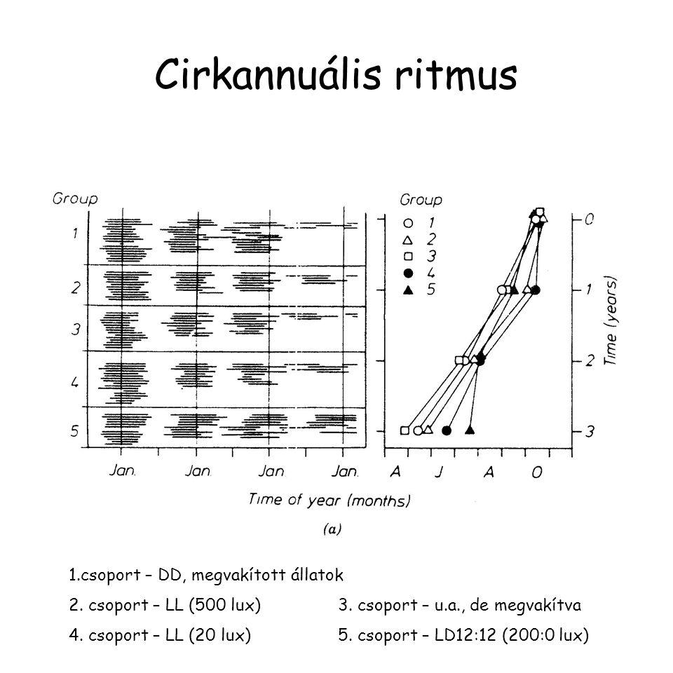 Cirkannuális ritmus 1.csoport – DD, megvakított állatok