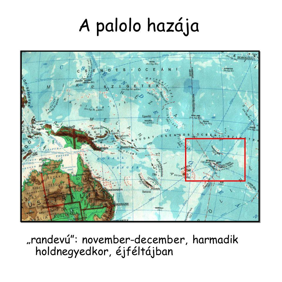 """A palolo hazája """"randevú : november-december, harmadik holdnegyedkor, éjféltájban"""