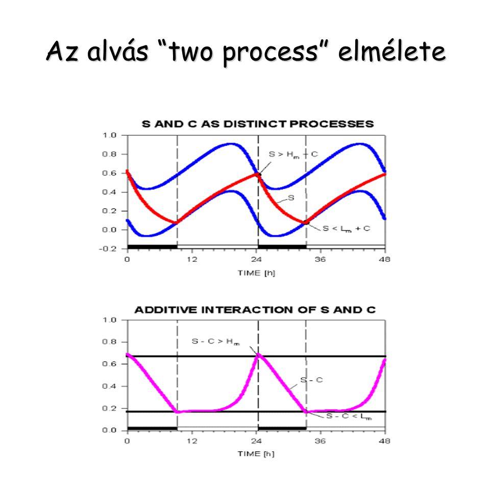 Az alvás two process elmélete