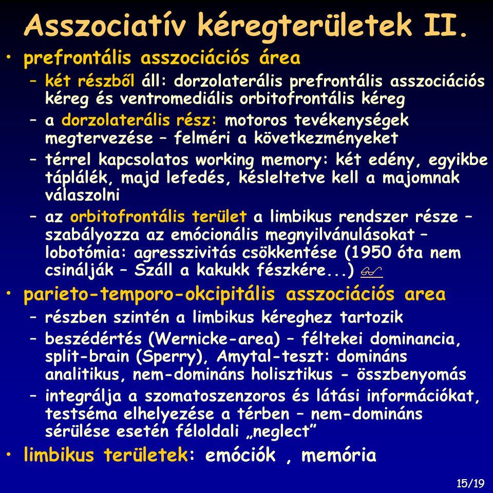 Asszociatív kéregterületek II.