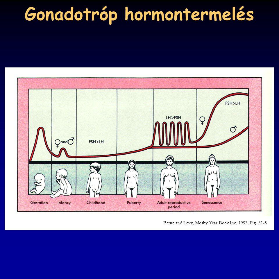 Gonadotróp hormontermelés