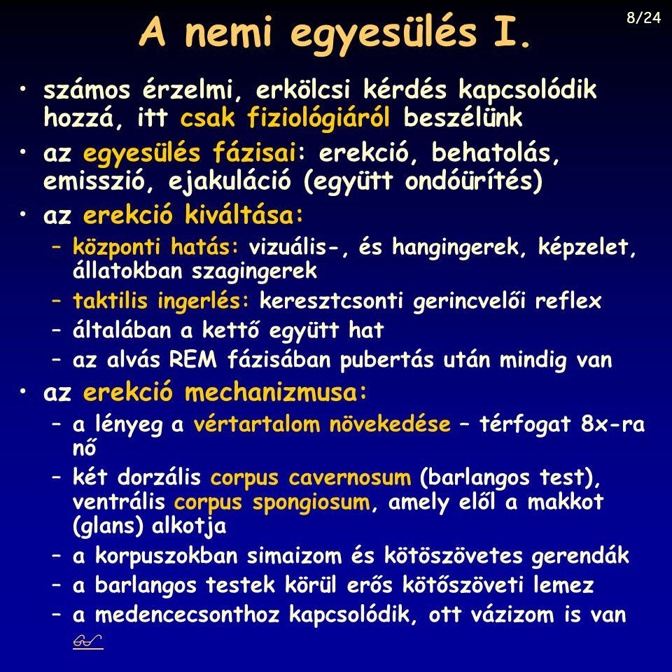 A nemi egyesülés I. 8/24. Fonyó: Orvosi Élettan, Medicina, Budapest, 1997, Fig. 33-8.