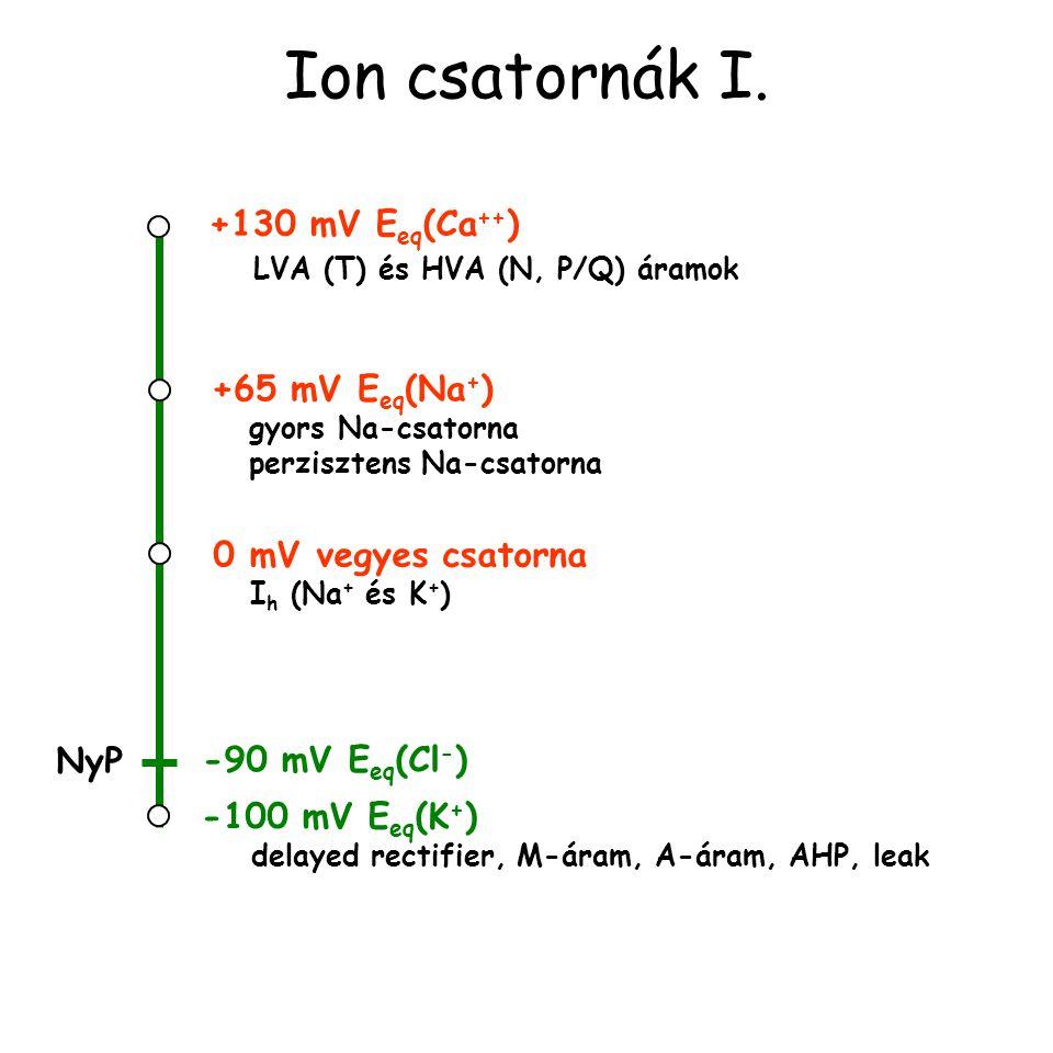 Ion csatornák I. +130 mV Eeq(Ca++) LVA (T) és HVA (N, P/Q) áramok