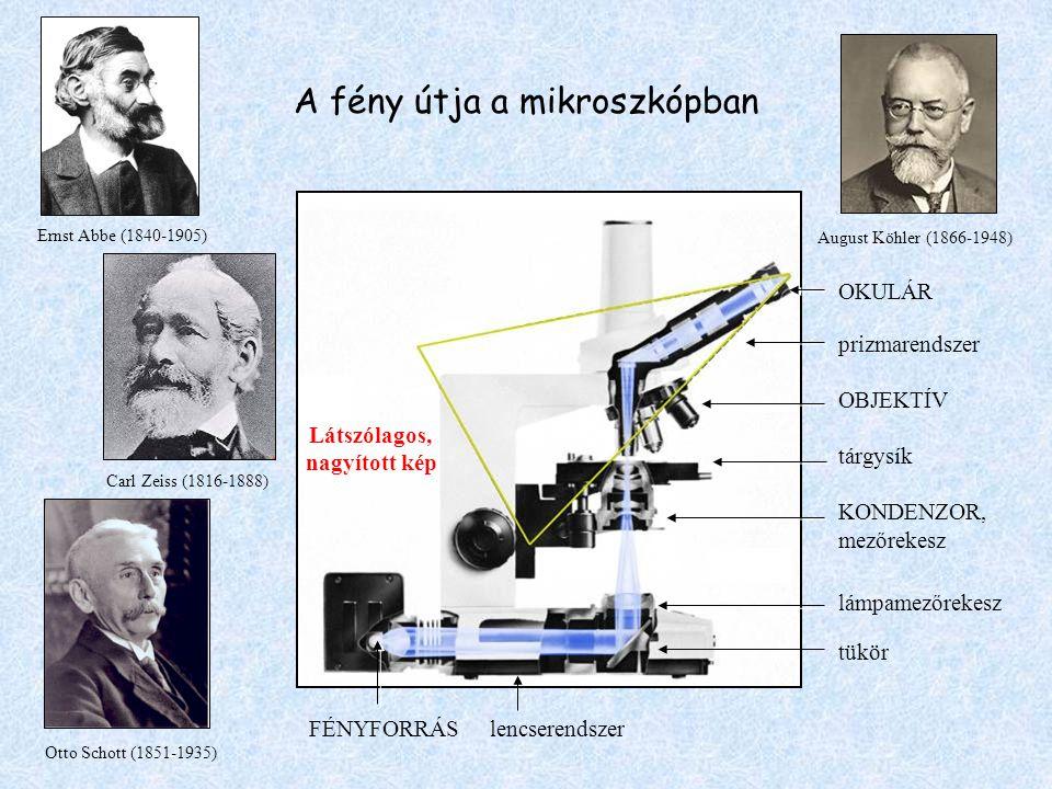A fény útja a mikroszkópban