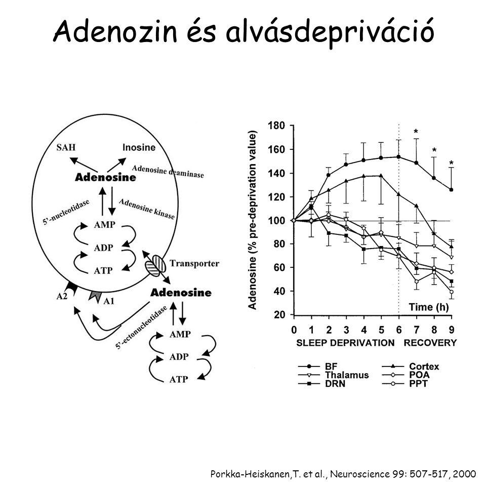 Adenozin és alvásdepriváció