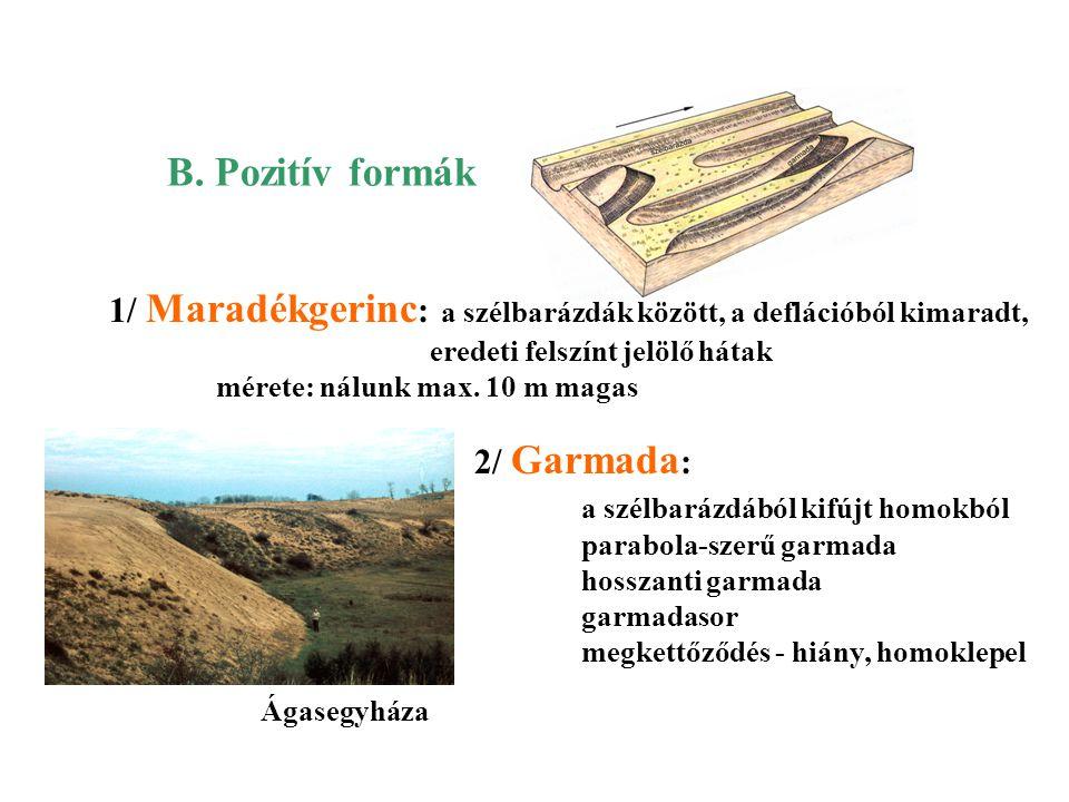B. Pozitív formák 1/ Maradékgerinc: a szélbarázdák között, a deflációból kimaradt, eredeti felszínt jelölő hátak.