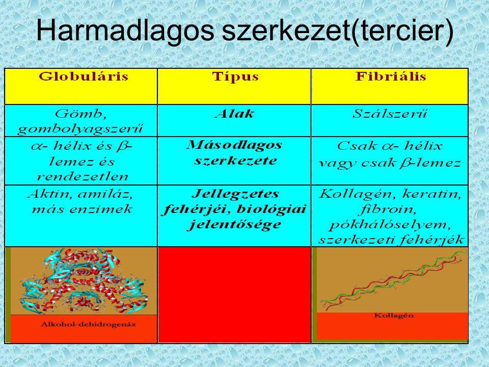 Harmadlagos szerkezet(tercier)