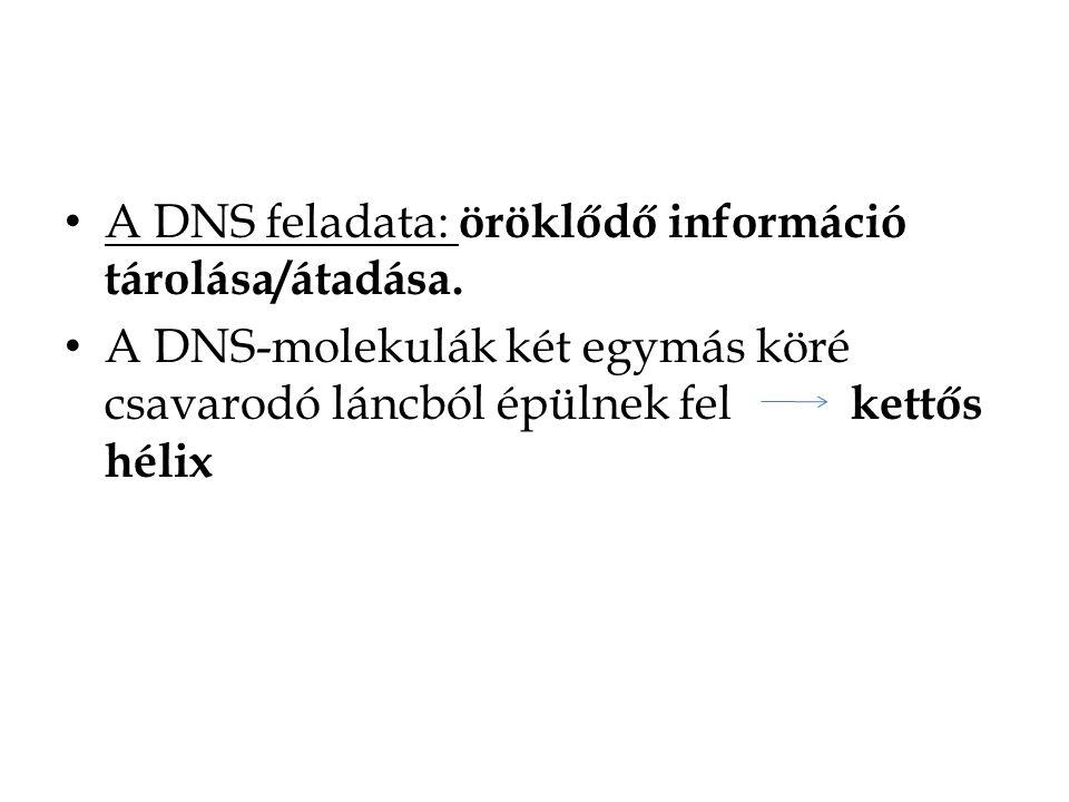 A DNS feladata: öröklődő információ tárolása/átadása.